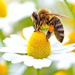 hamyartest - همیار تست - نمونه سوال و آزمون آنلاین - سوال فنی و حرفه ای - پرورش دهنده زنبور عسل