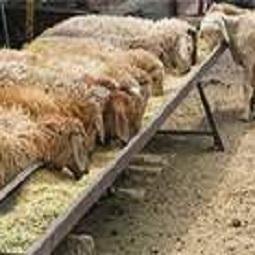 hamyartest - همیار تست - نمونه سوال و آزمون آنلاین - سوال فنی و حرفه ای - پرورش دهنده گوسفند